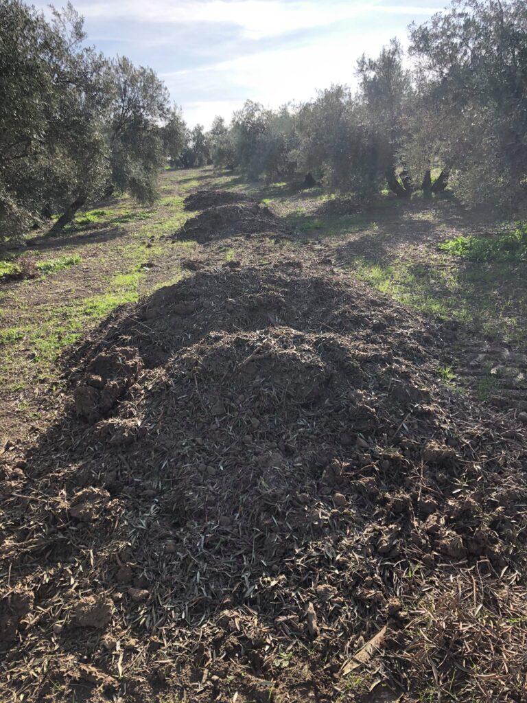 En Aceites Casablanca cuidamos el suelo de nuestro olivares 1
